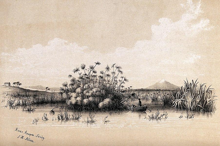 papyrus - image 5