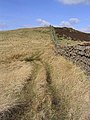 A track and dyke on the Keir Hills - geograph.org.uk - 404061.jpg