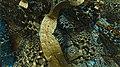 Abox mod11 rotVary OpenCL 76185412451 8K.jpg