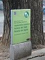 Acàcia del Japó del carrer del Mas Duran P1500892.jpg