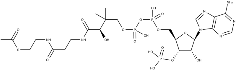File:Acetyl CoA.png