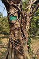 Acharya Jagadish Chandra Bose Indian Botanic Garden - Howrah 2011-01-08 9871.JPG