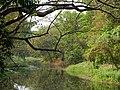 Acharya Jagadish Chandra Bose Indian Botanic Garden - Howrah 2011-03-20 1986.JPG