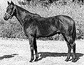 Ackackhorse.jpg