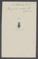 Actenodes - Print - Iconographia Zoologica - Special Collections University of Amsterdam - UBAINV0274 023 09 0006.tif