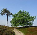 Aekingerzand Nationaal Park Drents-Friese Wold5.jpg