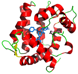 Aequorin - Aequorin ribbon diagram from PDB 1ej3 with prosthetic group coelenterazine in blue