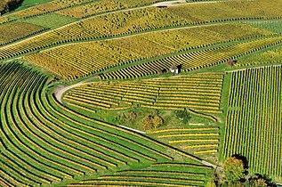 Aerial View - Landschaft Markgräflerland1.jpg