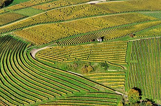 Vineyard - Aerial view of vineyards in Markgräflerland, Baden, Germany.