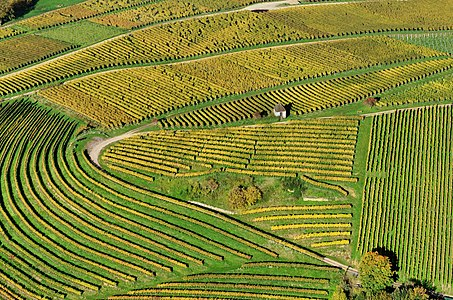 Aerial view of vineyards at Markgräflerland