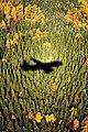 Aeroflot silhouette on forest.jpg