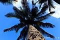 Ahí tienen el camino hacia la frutería, si es que les apetecen unos cocos ¡claro - panoramio.jpg