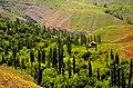 Alborz - Taleqan - Dizan - panoramio.jpg