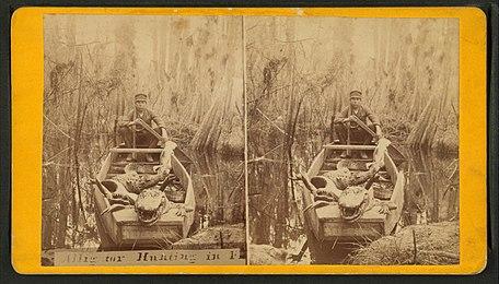 alligator hunting wikipedia