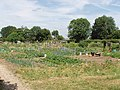 Allotments, New Denham - geograph.org.uk - 20370.jpg