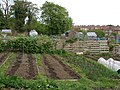 Allotments adjacent to The A139 - geograph.org.uk - 418477.jpg