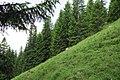 Almwiese westlich des Wendelsteins - geo.hlipp.de - 11430.jpg
