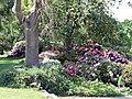 Alter Botanischer Garten Kiel Rhododendron2.jpg