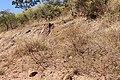 Alto Araguaia - State of Mato Grosso, Brazil - panoramio (338).jpg