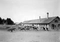 Amerikanischen Pferde auf die Weide gelassen - CH-BAR - 3238384.tif