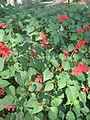 Amin al-Islami Park - Trees and Flowers - Nishapur 068.JPG