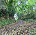 An Autumnal View of Mallions Lane, West Sussex - geograph.org.uk - 69940.jpg