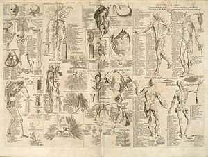 Diagrama de anatomia humana retirado da Cyclopaedia, Dicionário Universal das Artes e Ciências, de 1728