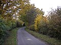 Ancient hedge - Nightingale Hall lane. - geograph.org.uk - 278741.jpg