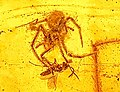 Ancient spider attack in amber.jpg