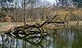 Anglerteich - Walldorf - Mörfelden-Walldorf - Germany - 01.jpg