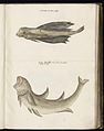 Animal drawings collected by Felix Platter, p1 - (54).jpg