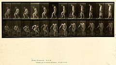 Animal locomotion. Plate 236 (Boston Public Library).jpg