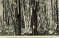 Annual report (1909) (14771623033).jpg