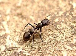 S oteplením se k útoku chystají armády mravenců.