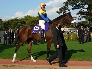 Apapane (horse) Japanese-bred Thoroughbred racehorse