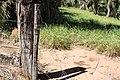 Araguainha - State of Mato Grosso, Brazil - panoramio (108).jpg