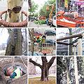 Arboriculture.jpg