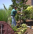 Arborist M D Vaden.jpg