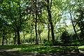 Arbres au Parc Elisabeth de Bruxelles.JPG
