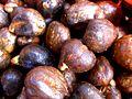 "Artocarpus altilis var. seminifera (Graines du ""châtaignier"").jpg"
