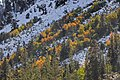 Aspen streaks snow hillside close.jpg