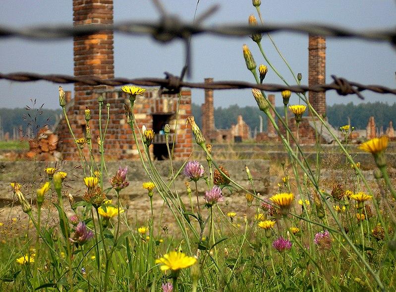File:Auschwitz-Birkenau abgebrannte Barracken.jpg