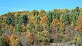 Autumn has arrived (5155444423).jpg