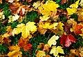 Autumn leaves, Dixon Park, Belfast (2) - geograph.org.uk - 1007172.jpg