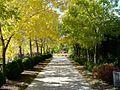 Autumn sidewalk (2878387306).jpg