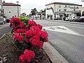 Avenue Paccard - panoramio.jpg