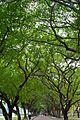 Avenue of Trees (6343576229).jpg