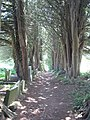 Avenue of trees in Penryn Glebe Cemetery - geograph.org.uk - 838831.jpg
