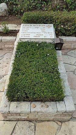 Image result for אבשלום פיינברג עץ תמר