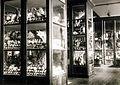 Az Érseki Főgimnázium állattani gyűjteménye. Fortepan 100176.jpg